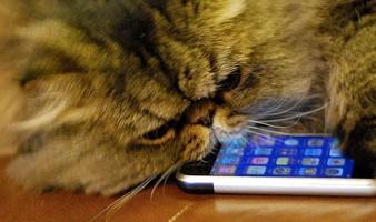 9 canlı teknoloji sms